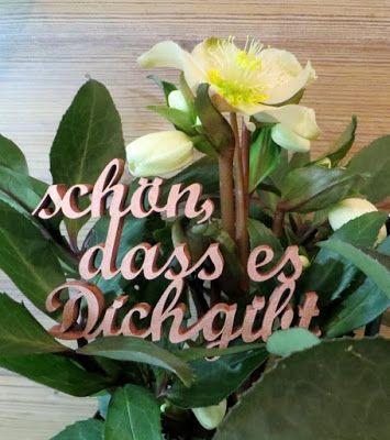 Schönes winterliches Geschenk: Christrose im Vintage-Übertopf mit Botschaft in 3D-Holzschrift