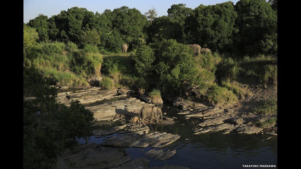 افيال تجتمع حول الماء