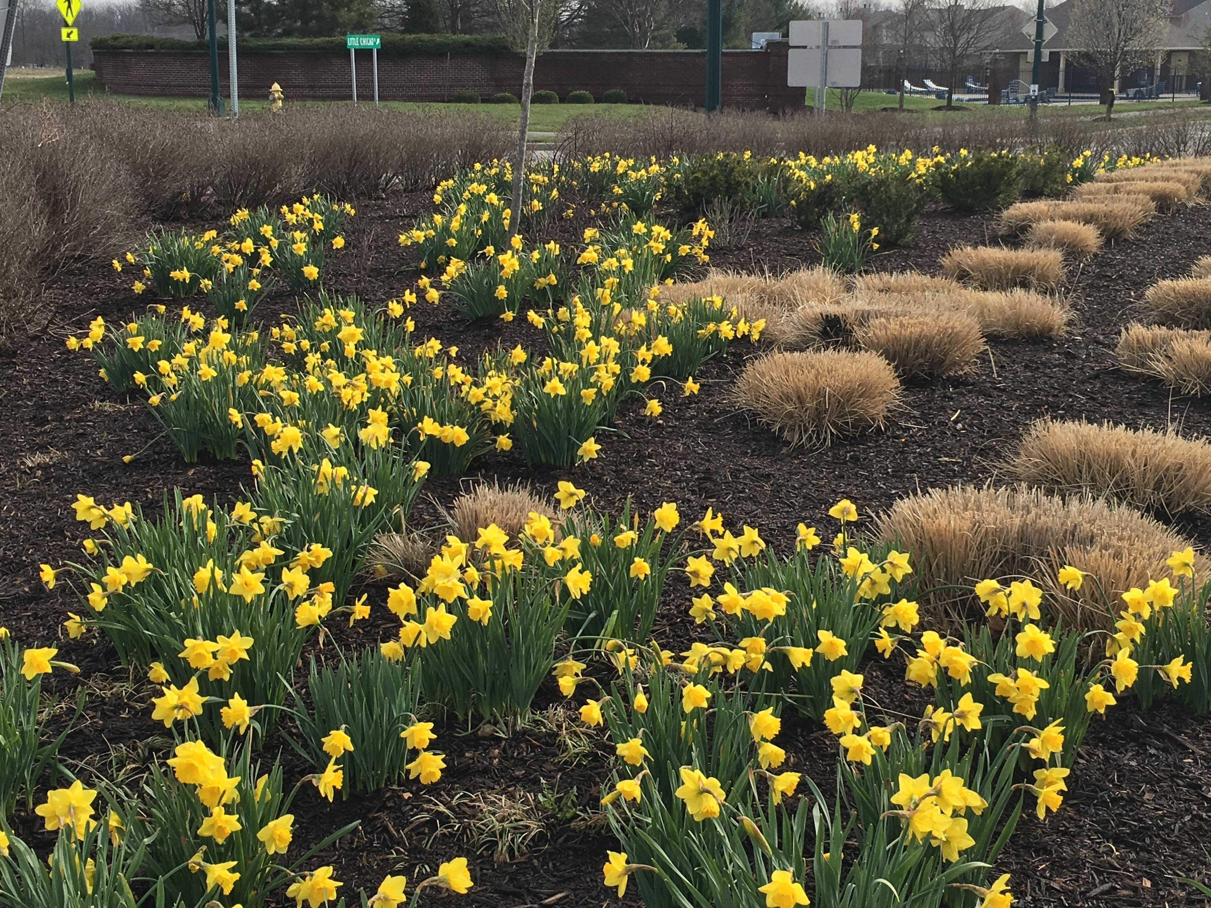 Hipstoric Downtownnoblesville Springflowers