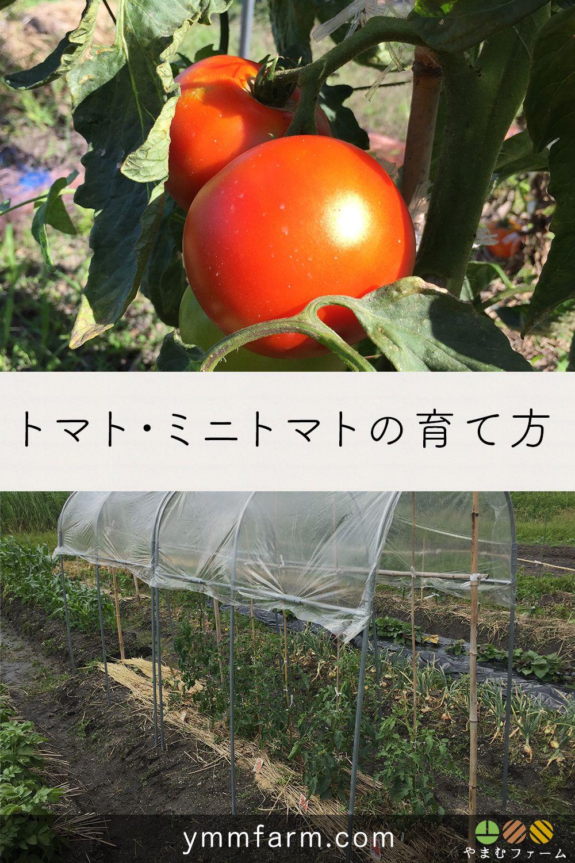 トマト ミニトマトの栽培方法 育て方のコツ 2020 プランター