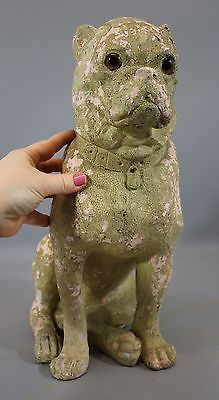 Life-Size-Antique-Circa-1900-Plaster-Boston-Terrier-Glass-Eyes-No-Reserve