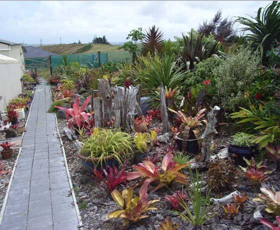 Bed and breakfast and Northland garden to visit planted with bromeliads for sale at Aloe Aloe Gardens at Kaitaia in the far north of New Zealand nz