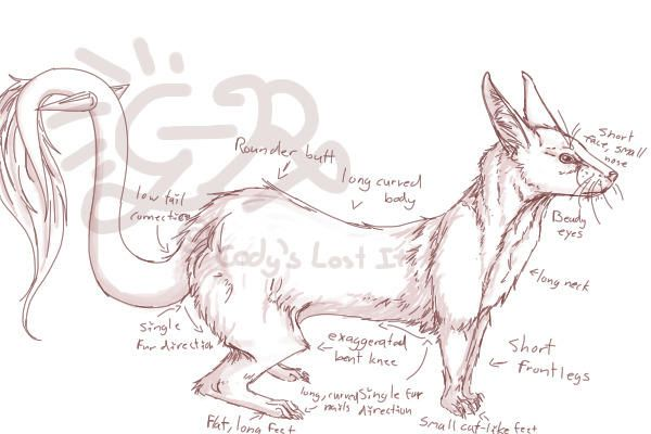 Ferret-anatomy-poster-image-search-results | FERRET ANATOMY ...