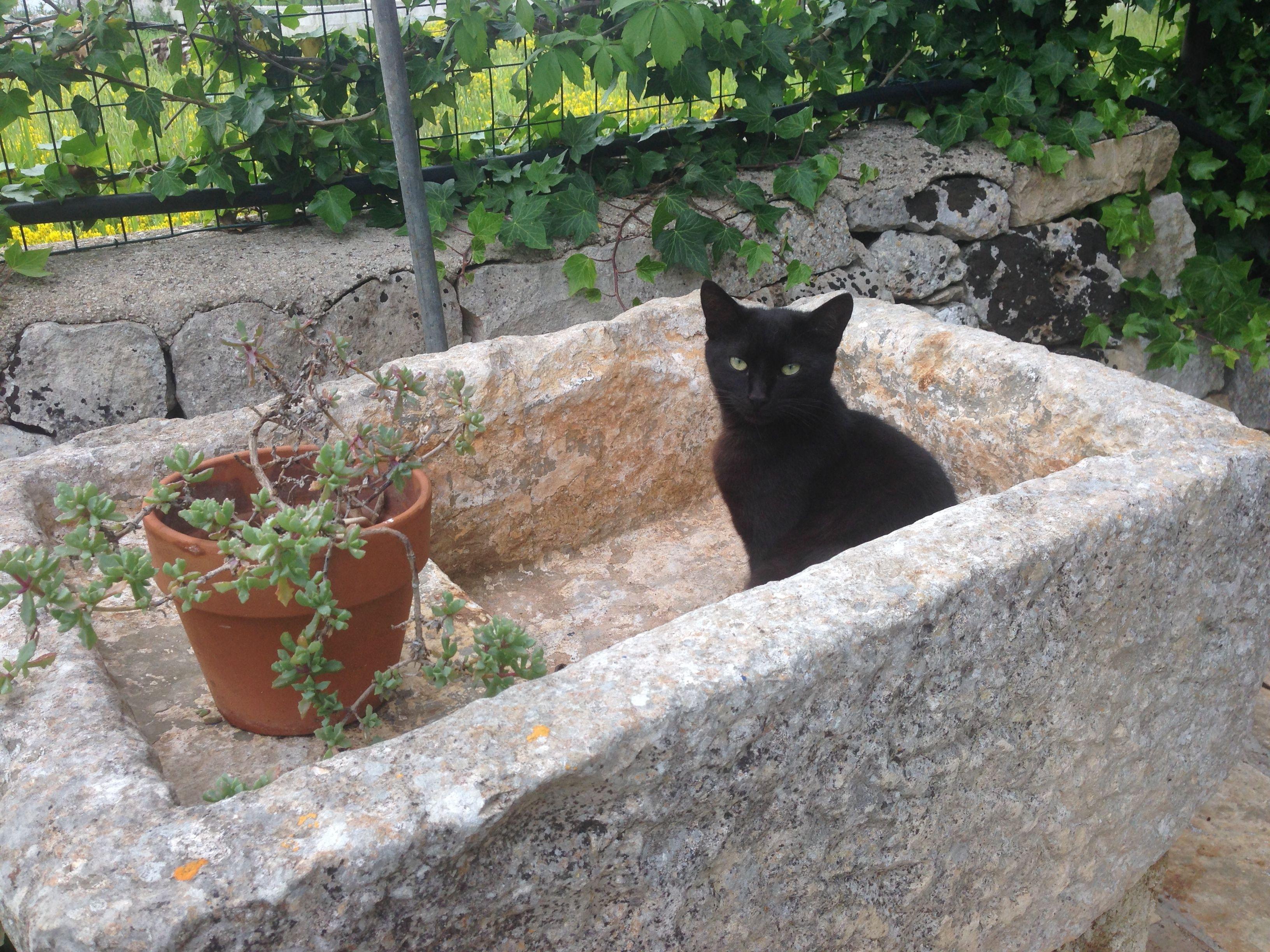 Masseria Salinola Hotel Ostuni in Ostuni, Puglia - http://www.tripadvisor.com/Hotel_Review-g642178-d597048-Reviews-Masseria_Salinola-Ostuni_Province_of_Brindisi_Puglia.html