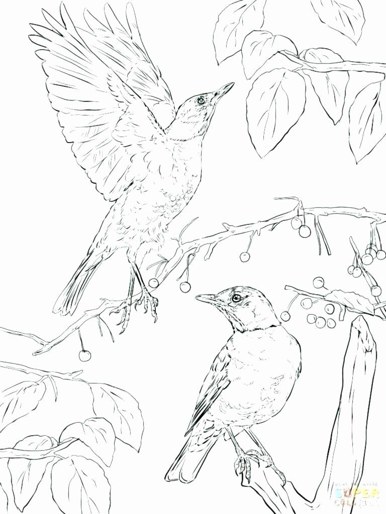Pennsylvania State Bird Coloring Page Awesome Pennsylvania State
