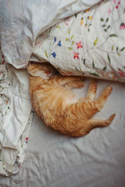 Pie: Dona, sua cama é tão gostosa!