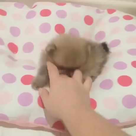 Playing with a ball of fluff