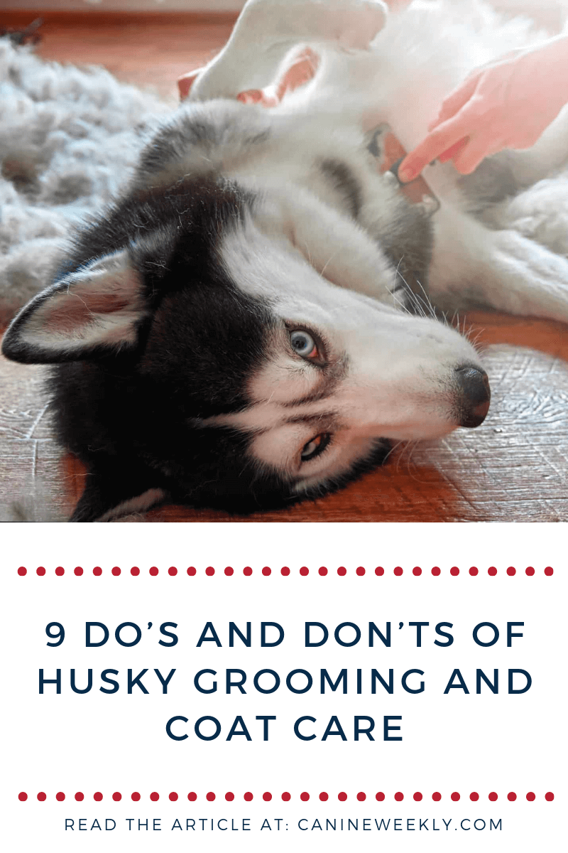 Husky Grooming And Coat Care Taking Care Of A Husky S Coat Isn T Always A Case Of Common Sense Knowing What Not To Do Husky Grooming Dog Care Dog Allergies