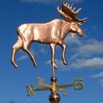 Copper Moose 433
