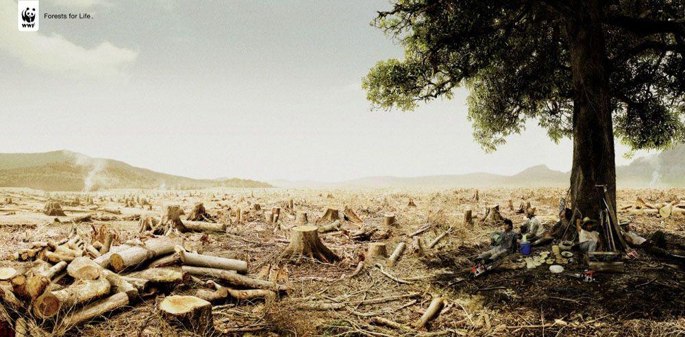 WWF - Déforestation
