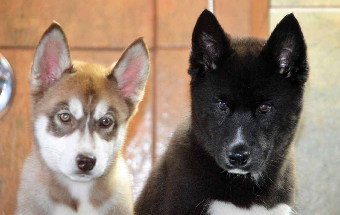 Houston S Once Troubled Animal Shelter Euthanizing Fewer Animals Animal Shelter Animal Shelter Adoption Animals