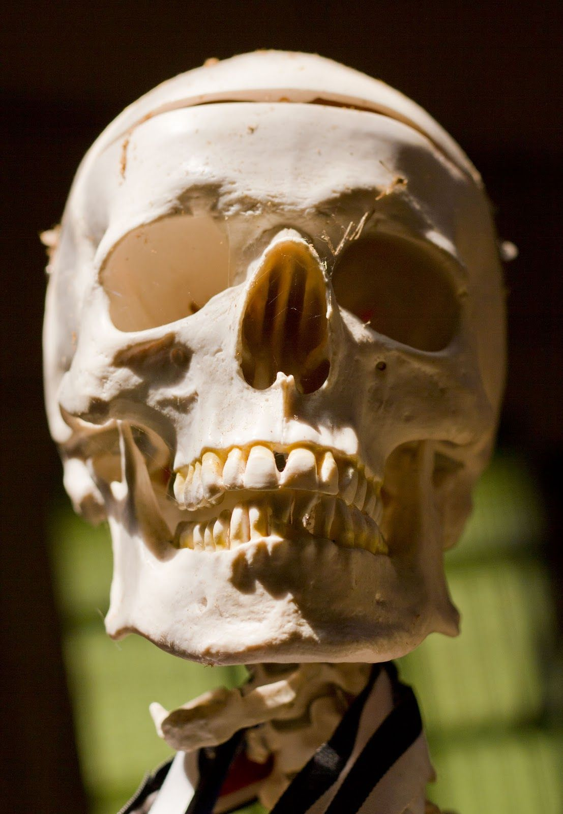 skull photography - Google Search | Skeleton art ...
