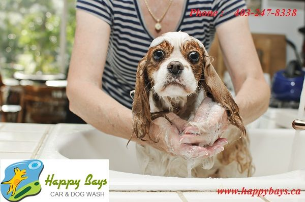Dont you know the prime benefits of self serve dog wash if yes dont you know the prime benefits of self serve dog wash if solutioingenieria Choice Image