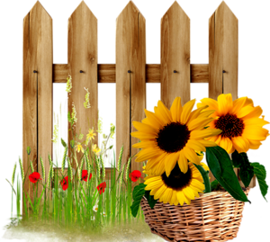 sunflower basket fences collections