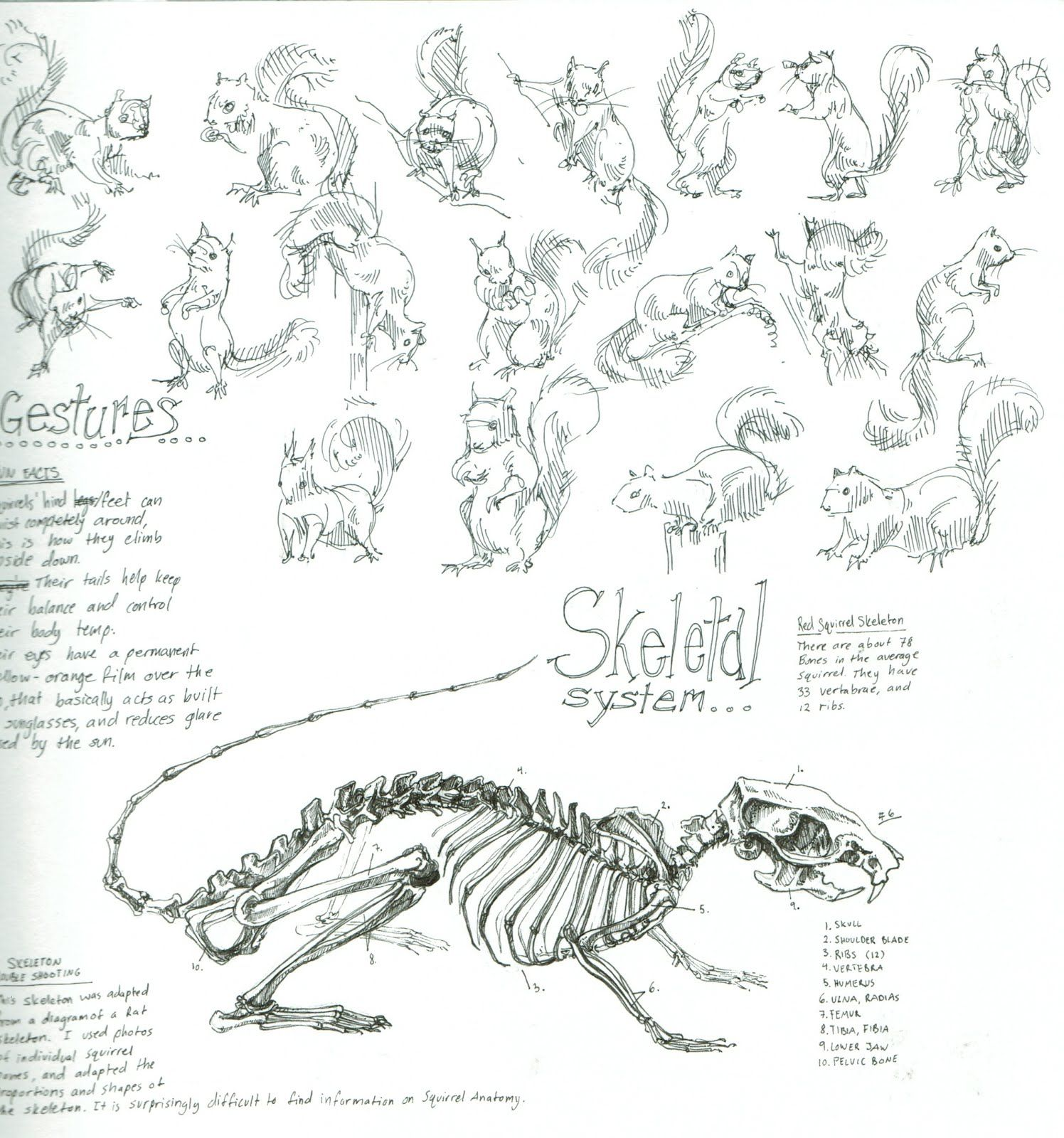 squirrel skeleton diggin animals burrows tunnels caves rh pinterest com