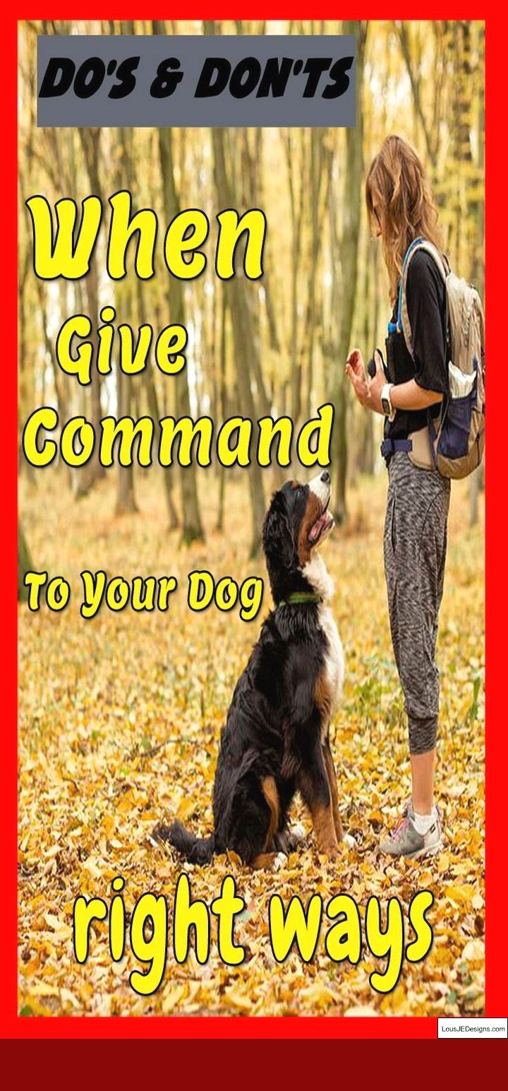 How To Train Your Dog To Pee Or Poop Outside And Pics Of How To