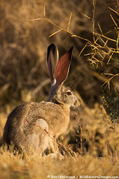 This Book Is A Great Introduction To Both Hunting Cottontails And