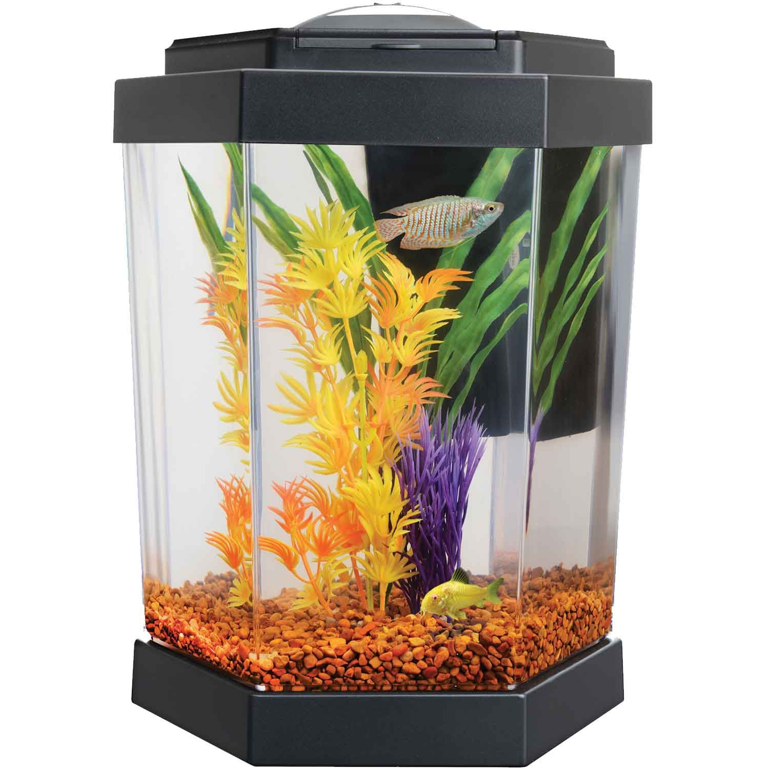 Petco Hex Freshwater Aquarium Food Animals Goldfish Tank Small