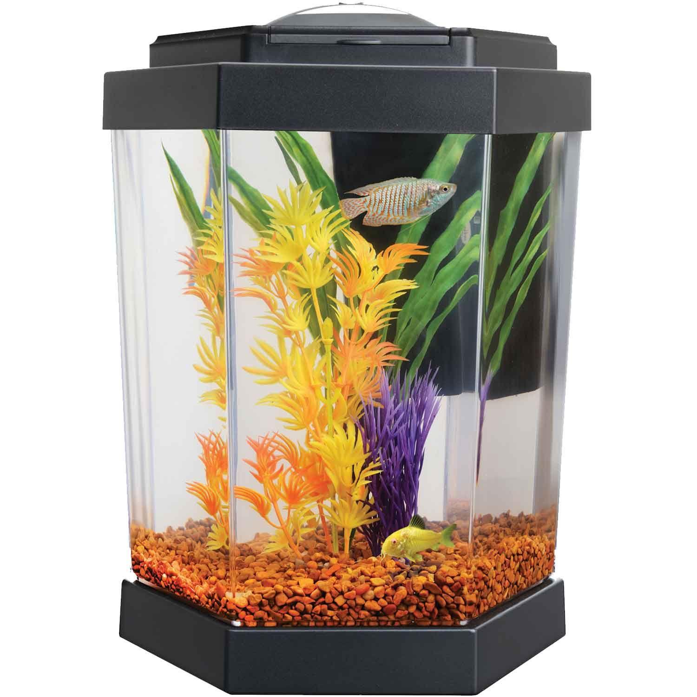 Petco Hex Freshwater Aquarium Fish Pinterest