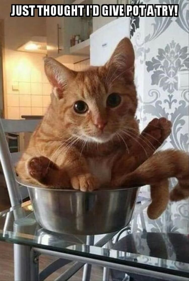 ✔ Funny Cats Pictures Cartoon #funnyvideo #funnyaf #funnypics