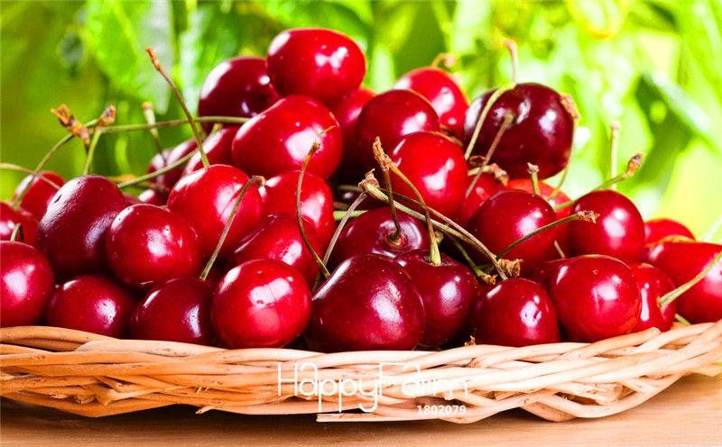 2016 Direct Selling Seeds Vegetables Semillas De Flores Plants 100 Pcs/lot Free Shipping Cherry Seeds For Diy Home Garden Free