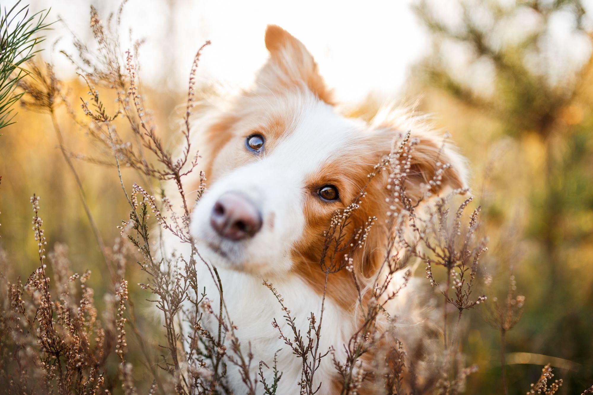 Pin Von Hafner Photography Hunde Und Auf Hundeportraits In 2020 Hundefotografie Hund Portraits Hunde