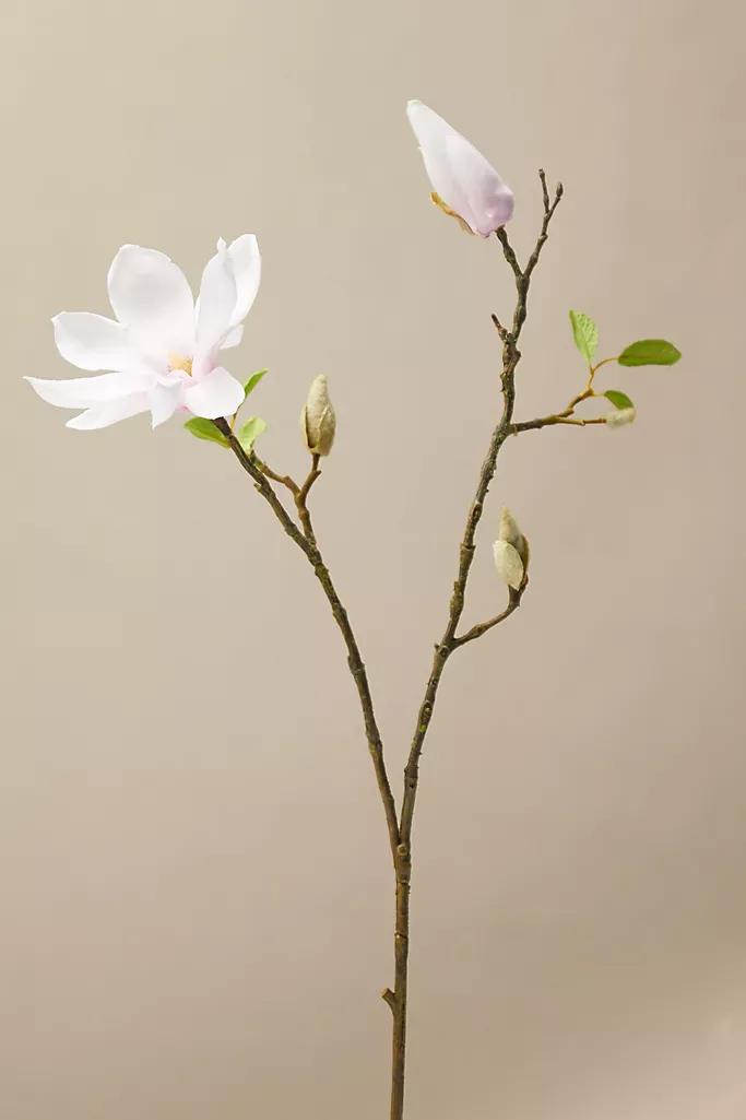 Faux Sparse Magnolia Stem Spring Flowers Magnolia Spring Art