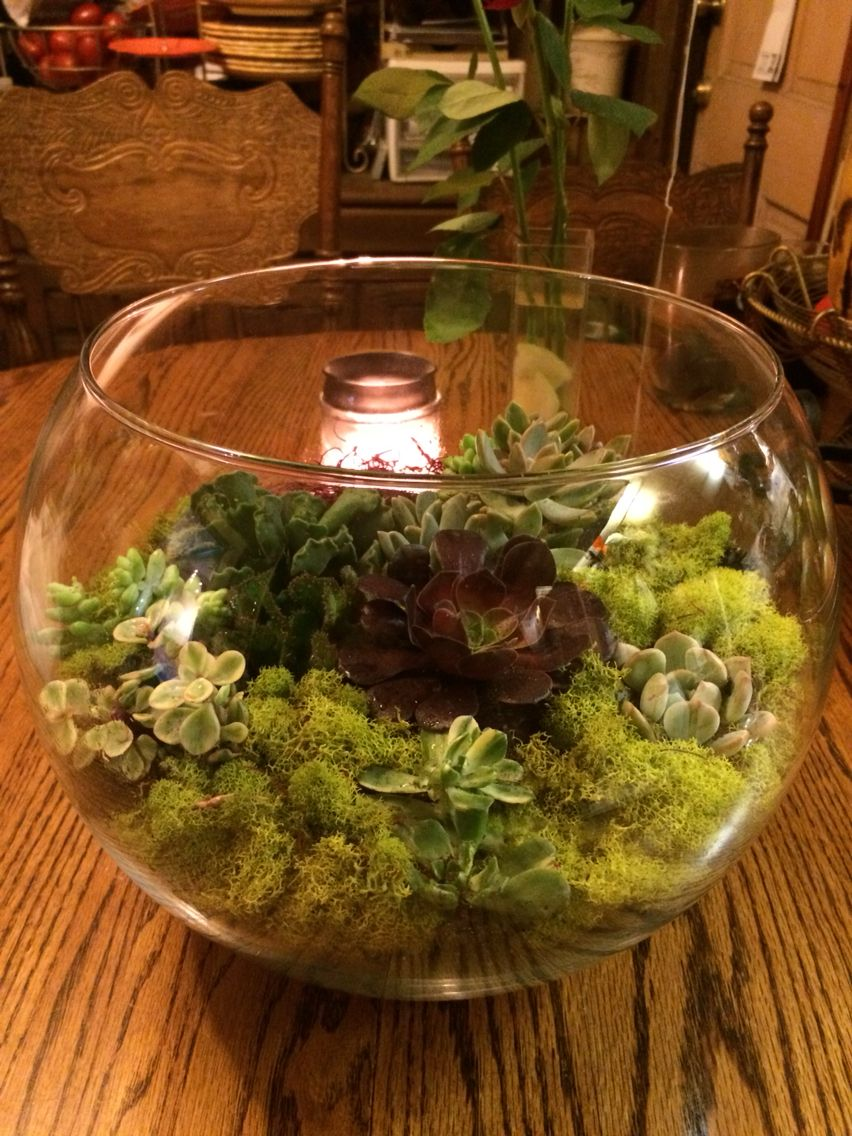 Mossy Succulent Garden in a large fish bowl. So fairy! | Nature\'s ...