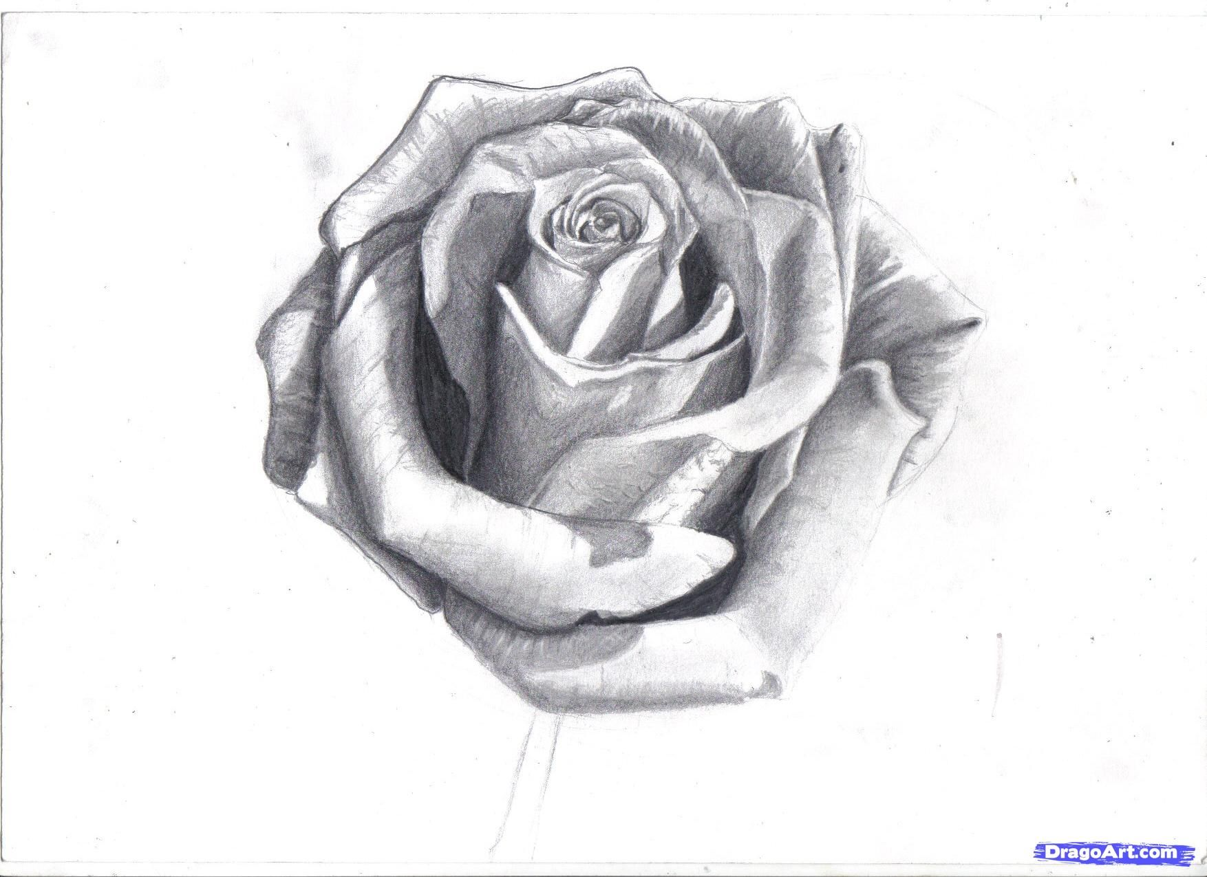 How to Draw a Rose In Pencil, Draw a Realistic Rose, Step