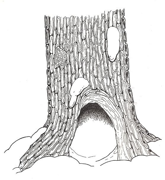 The Mitten Hollow Tree Base coloring page Coloring pages