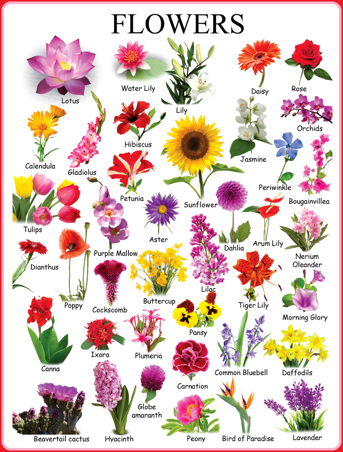 16195612 1170358233081501 3323251198305245398 N Png 692 911 Flower Chart Flower Names Different Types Of Flowers
