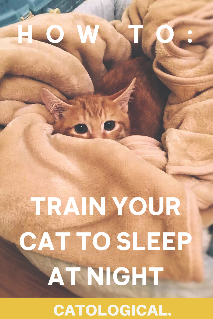 Are Cats Nocturnal How To Get Your Cat To Sleep At Night In 2020 Cat Parenting Cat Training Cat Quotes Funny