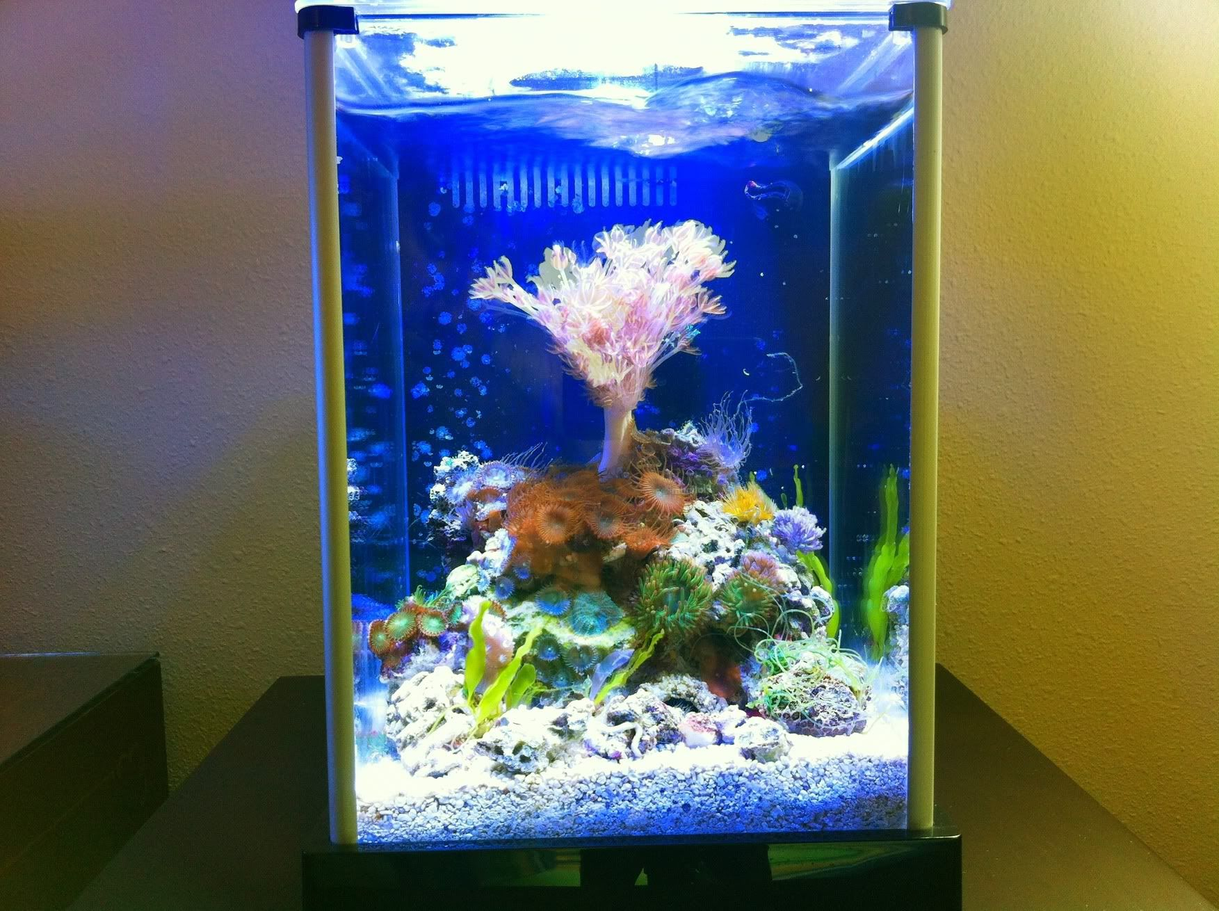 Posted Image Nano reef Tank Pinterest