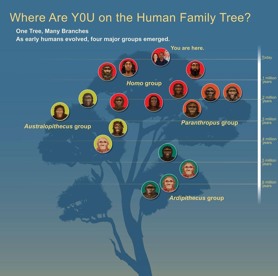 Pin By Shibori Inc On Interesting In 2020 Human Family Tree
