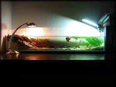 whoa neat idea das gefilterte aquarium ohne filter achtung bilder aquarium forum aquarium. Black Bedroom Furniture Sets. Home Design Ideas