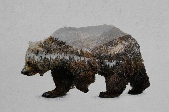 Grizzly bear xxx