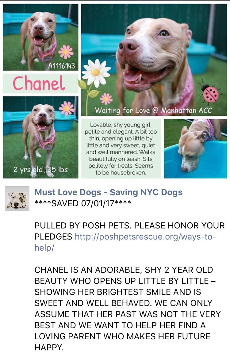Pin By Kathy Lytle On Rescued Or Safe Animal Rescue Pitbulls Pets