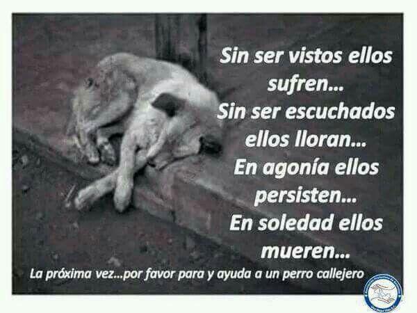 Tenemos Que Amar A Los Animales Respetarloscuidarlos Etc