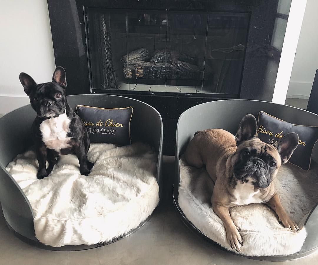 Pin By Rylee Kamp On Dogs French Bulldog Toy Dog Breeds