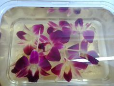 Webklik.nl - resin-coating-orchids