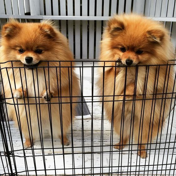 Simba Looks Like We Re Going To Be Locked Up Forever Winnie