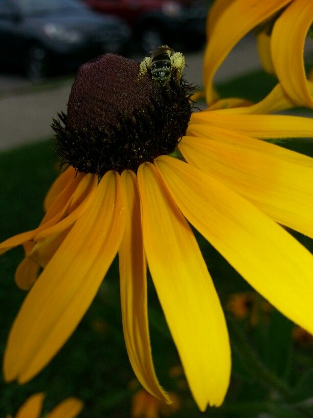 Just amzaing!! A little bee collecting pollen!