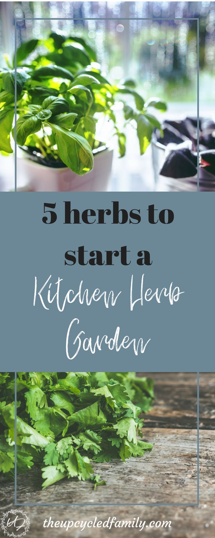 5 easy herbs to grow in your kitchen herb garden   Herbs, Gardens ...