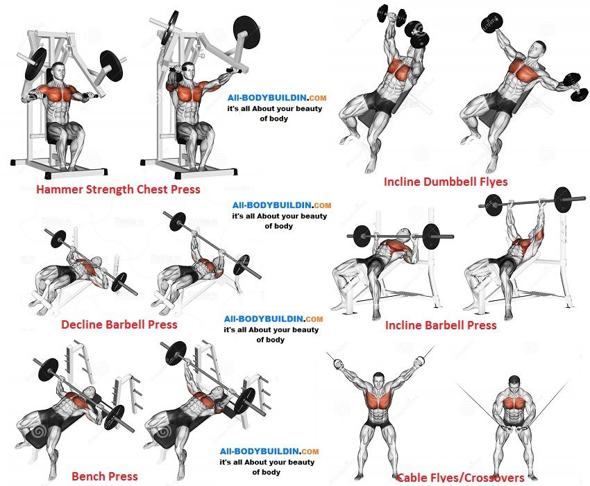 Chest Training Program F Chest Workouts Chest Workout Gym Workout Chart