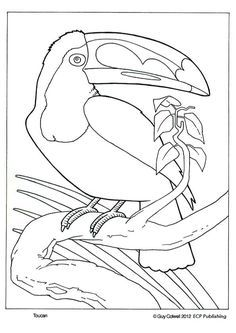 Toucan Coloring Pages Bird Pinterest.