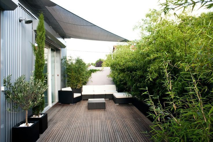 Bambus als Balkon Blickschutz groß Pflanzen Idee