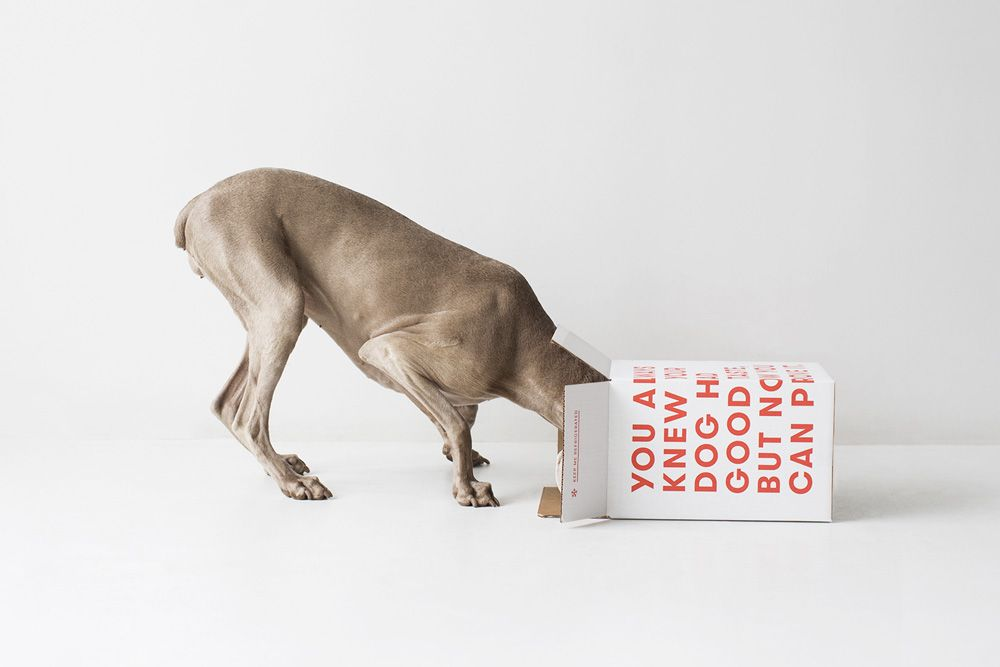 All about Ollie, the Natural Dog Food Delivery Service on disruptivedog.com