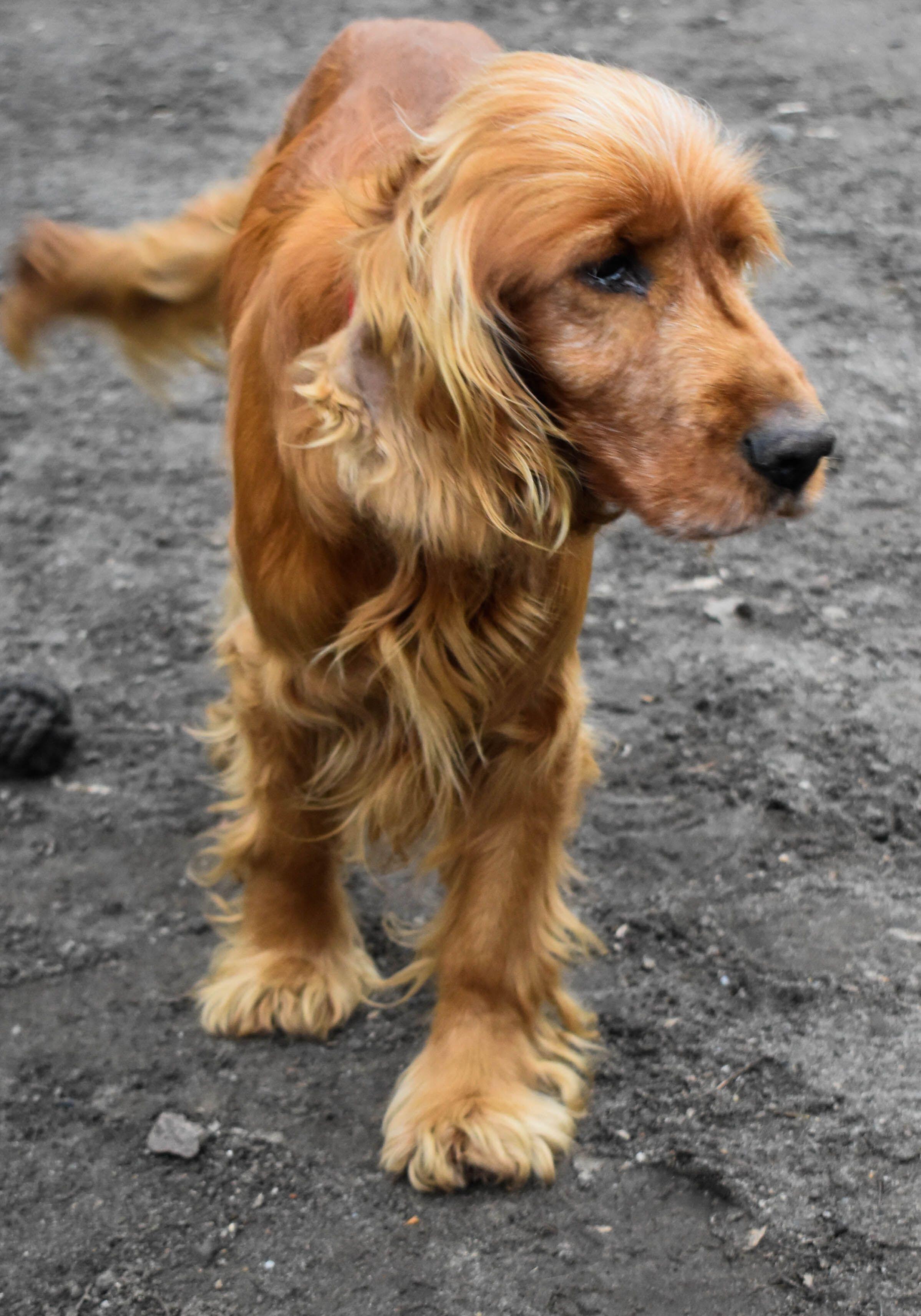 Tierheim Hund Brandenburg William