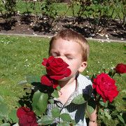 This site has a description of different kinds of roses