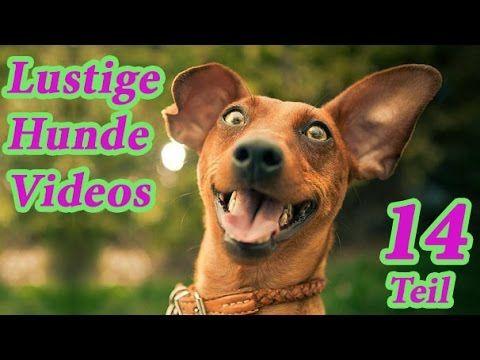 Youtube Lustige Hunde Videos